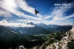ptak-orli-hnizdo